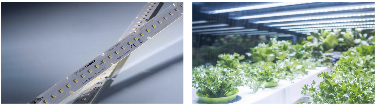LinearZ LED Modules for horticulture